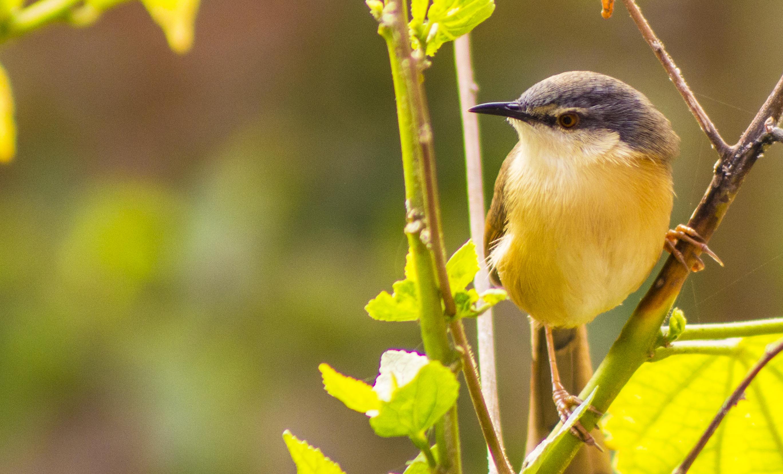 A bird in India