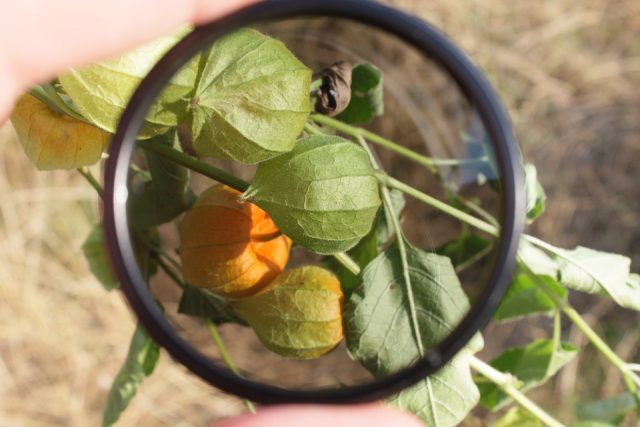 What is Polarizing Filters?