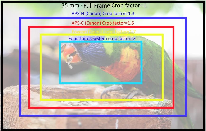Full Frame vs Crop Sensor - Which To Choose