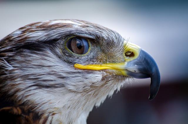 bird portraite
