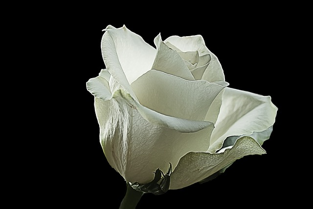 flower-black backgroung