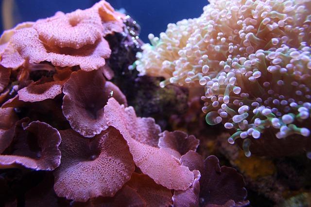 underwater-5