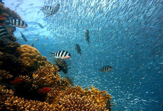 underwater-6