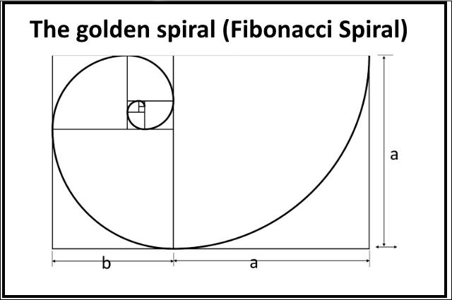 phi spiral