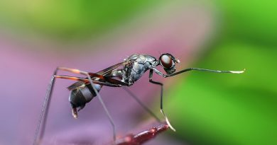 macro photography - Insect