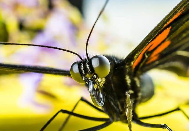 macro insect photo