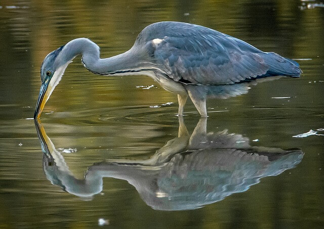 bird reflections on water