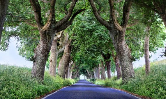 photography symmetry