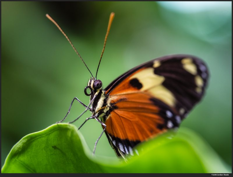 Best Macro Lens for Insect Photography