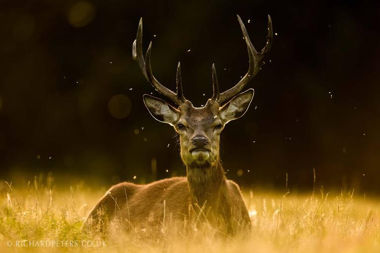 best nikon camera for wildlife photography